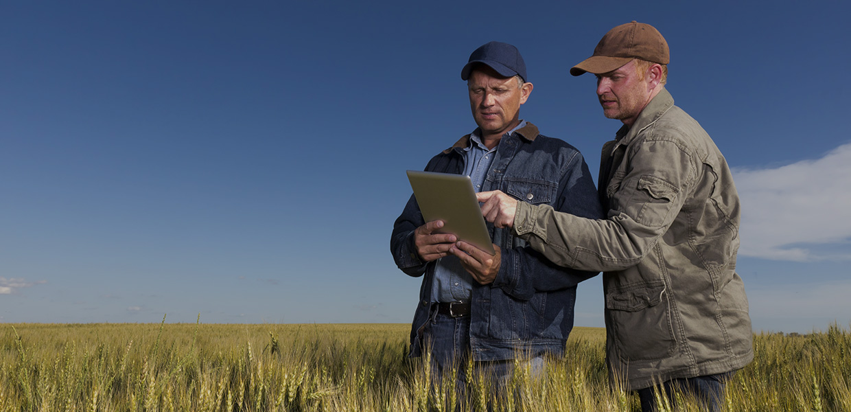 Two farmers in field with ipad